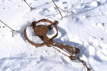 A set animal trap lies in the snow waiting to catch a varmint.
