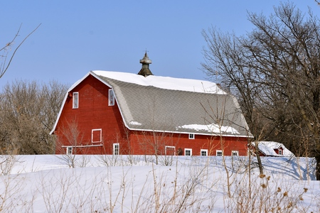 A wintry scene where an old red hip roofed barn has snow on the roof and cupola.