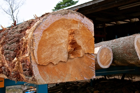 A huge pine log is being squared in preparation to be cut into dimensional lumber at a sawmill. Imagens - 122800465