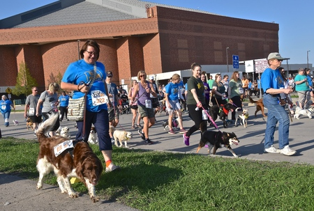 FARGO, NORTH DAKOTA-May 13, 2019 Dogs and trainersowners participate in the Furgo Dog Race which is underway at the annual Fargo Marathon which also includes a cyclothon, youth, 5K, 10K, half, and full runs.