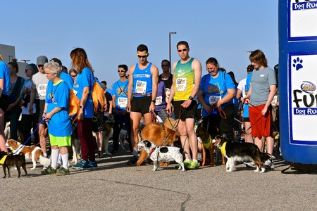 FARGO, NORTH DAKOTA-May 13, 2019: Dogs and trainers/owners participate in the Furgo Dog Race which is underway at the annual Fargo Marathon which also includes a cyclothon, youth, 5K, 10K, half, and full runs. Imagens - 122810010