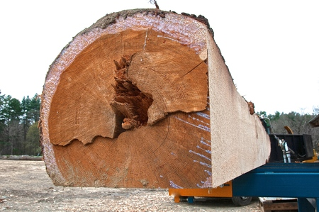 A huge pine log is being squared in preparation to be cut into dimensional lumber at a sawmill. Stok Fotoğraf