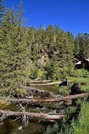 Fallen huge pine tree trunks spread across a mountain stream serving as walking bridges