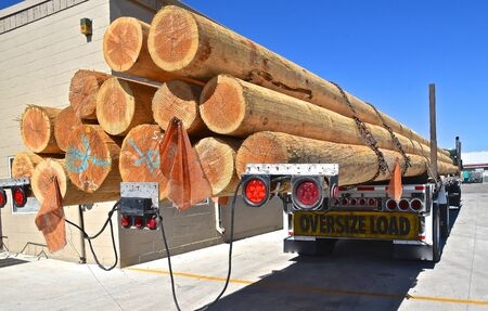 A semi trailer loaded with long fir or pine logs  is in  parking lot.