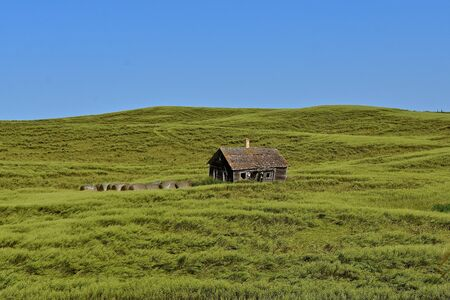 An old rickety shed stand alone in a field of lodged grain on rolling hills.