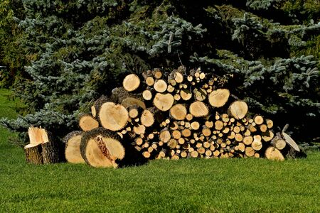 A stack of firewood is partially protected under an evergreen tree. Фото со стока