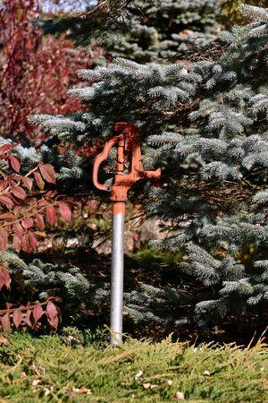 A  pressured water spigot is partially hidden under an evergreen tree. Stockfoto