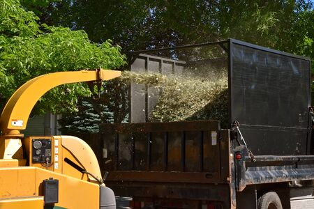 Shredded branches are being blown through a chute into the back of a truck. 版權商用圖片