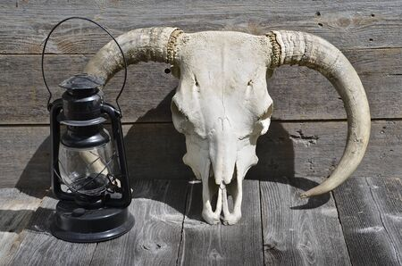 An old lantern is next to the skull of a huge beef bull 版權商用圖片