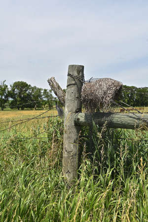 A rotting piece of fiber is tangled in the corner posts of a barb wire fence.