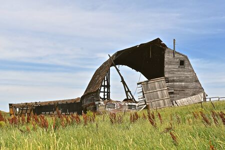 A very old barn is rotting and in a state of disrepair and brings back memories of a past dairy farm.