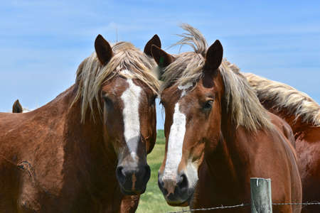 A pair of matching horses stand along a fence.