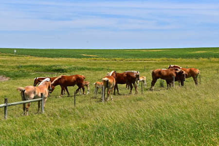 A herd of horses gather along a fence line with a prairie in the background 版權商用圖片