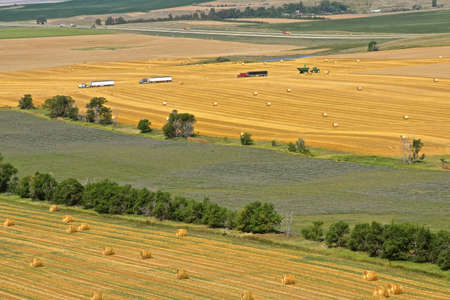 A view of farmland consists of round straw bales, a field of unharvested wheat and a line of trucks for hauling grain.