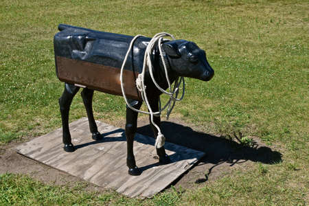A metal fake mechanical beef cow is for  practicing roping with a lariat by cowboys.