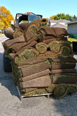 In the process of lifting, a pallet of stack sod rolls is leaning precariously