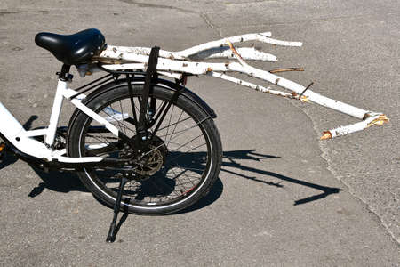 A bicycle is being used to transport small birch tree branches