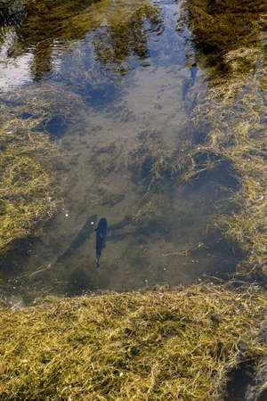 Various species of trout swimming in a pond at a fish farm Reklamní fotografie