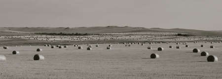 Round bales of hay stretch across the western prairies of South Dakota (black and white, long and narrow) Reklamní fotografie