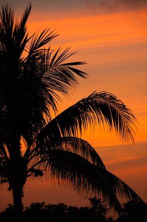 Feu rouge mexicaine  maya Sunset