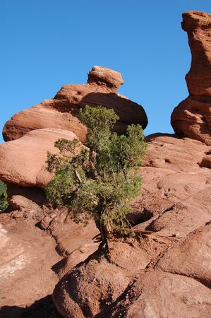 Loan tree in Red Rock formations at the Garden of the Gods, Colorado Springs, CO Stock Photo