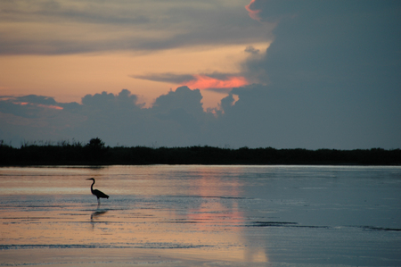White Ibis on Tigertail Beach at Sunset, Marco Island, FL