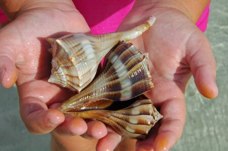 Conchs on Tiger Tail Beach, Marco Island, FL Stock Photo