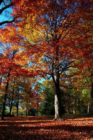 Fall Foliage dans le Aboretum Arnold � Boston, MA