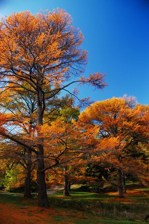 Fall Foliage in the Arnold Aboretum in Boston, MA