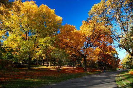 Fall Foliage in the Arnold Aboretum in Boston, MA Stock Photo - 2056021