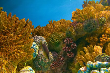 aquaria: Vivid coral life Stock Photo