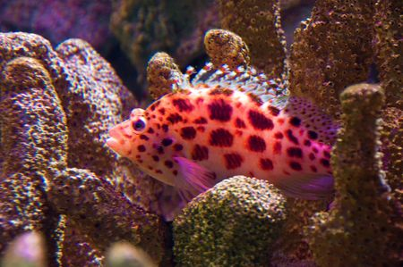 Brightly colored tropical fish amongst hard coral