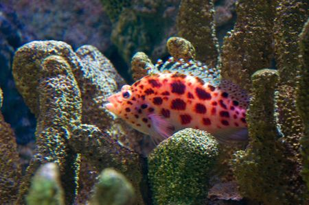 Brightly colored fish amongst hard coral