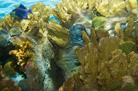 Reef life amongst hard coral and Sea Anemone Stock Photo