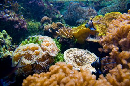 Vivid coral life Stock Photo - 2300261
