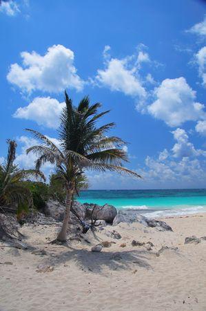 Palm Tree on the Mayan Riviera photo