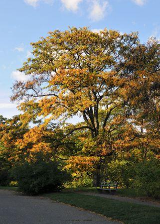Fall Foliage in the Arnold Aboretum in Boston, MA #4
