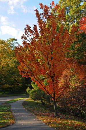 Fall Foliage in the Arnold Aboretum in Boston, MA #3