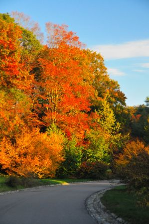 Fall Foliage in the Arnold Aboretum in Boston, MA #1 photo