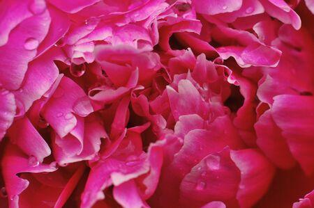 Macro of a blooming flower #1