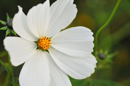 Spring Flower against a soft background #2