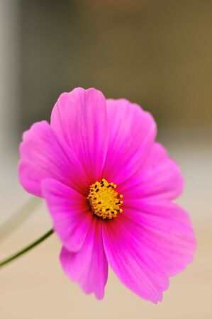 Spring Flower against a soft background #1 Stock Photo
