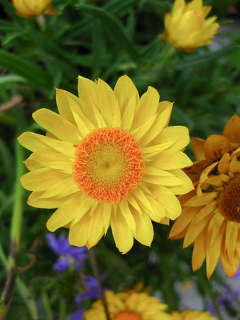 Summer Flowers #2 Stock Photo