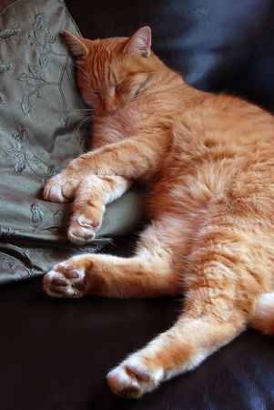 snoozing: Orange tabby snoozing on leather chair and green pillow Stock Photo