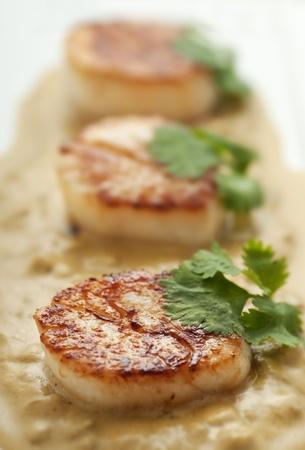 seared: Fresh seared scallops with cream sauce and cilantro