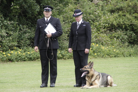 police dog: A police dog and handler competing at a Dog Trial Editorial
