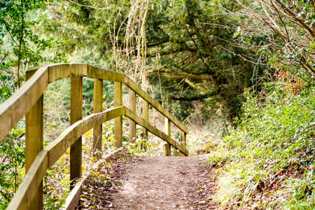 folliage: A fence lined pathway through the woods Stock Photo