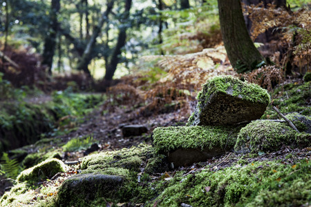 shadowed: Moss covered rocks in a shadowed area of woodland, England