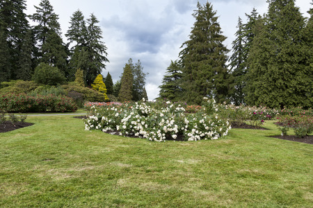 Rose Gardens of Stanley Park, Vancouver