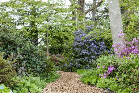 A manacured ath through a wild flower garden